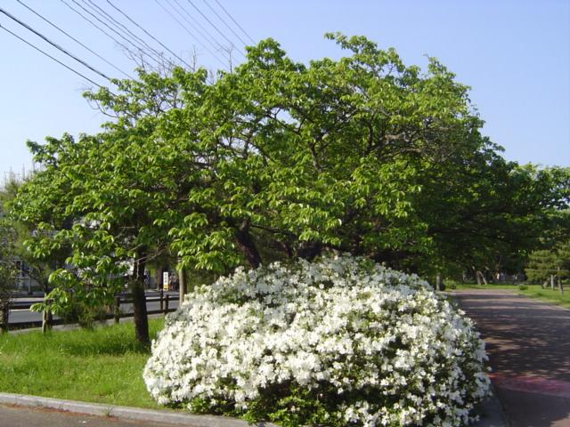 2008-春 209.jpg